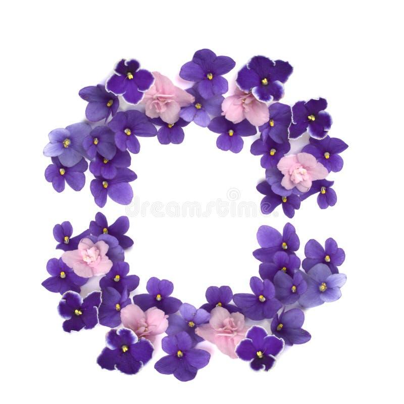 Frame dat van violette geïsoleerdea bloemblaadjes wordt gemaakt stock foto