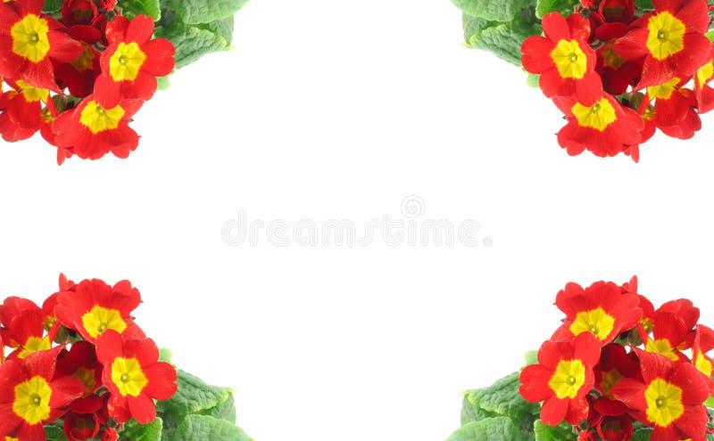 Frame de alta resolução decorado com as flores vívidas bonitas imagem de stock