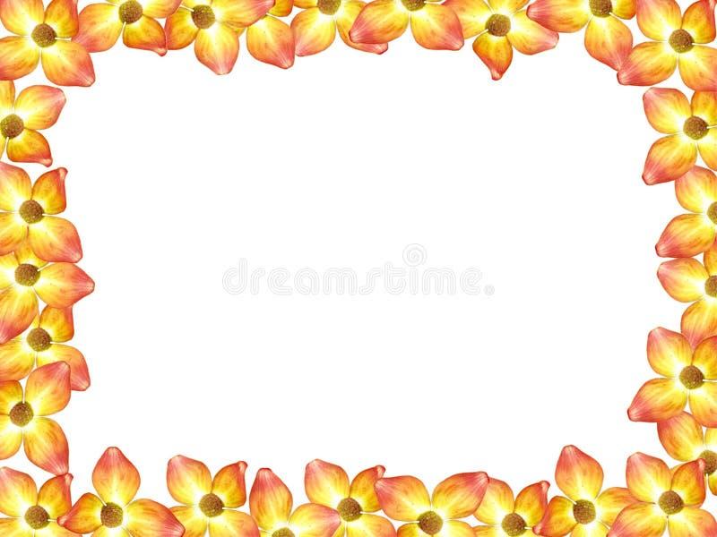 Frame de retrato da flor do Dogwood ilustração do vetor