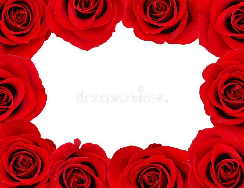 Frame de Rosa imagens de stock