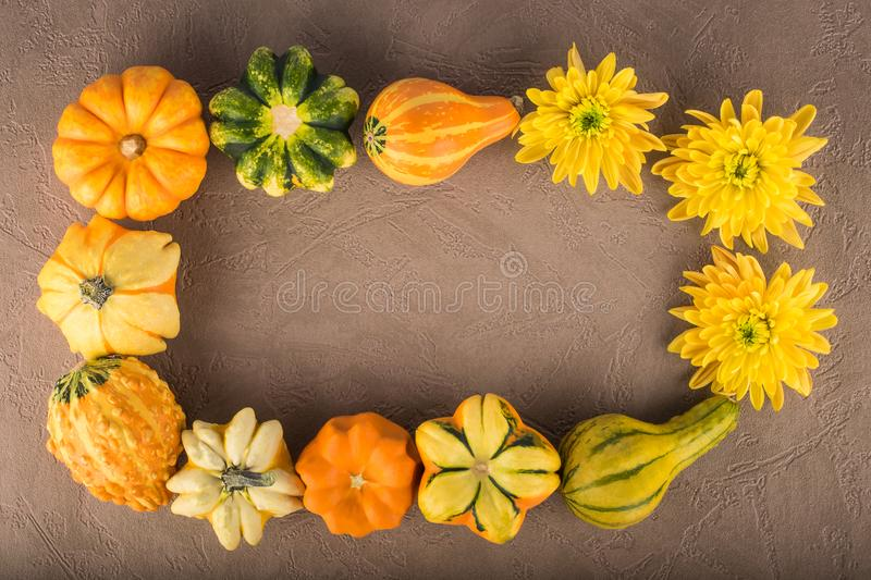 Frame of decorative pumpkins different sorts and chrysanthemum f royalty free stock photos