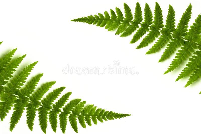 Frame do Fern imagens de stock