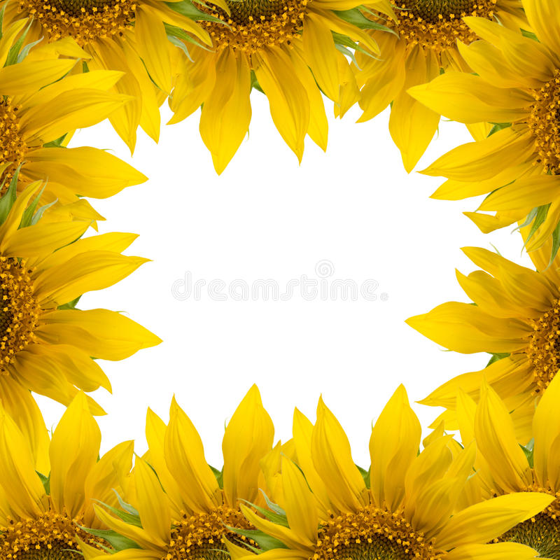 Frame Do Girassol Imagens de Stock Royalty Free