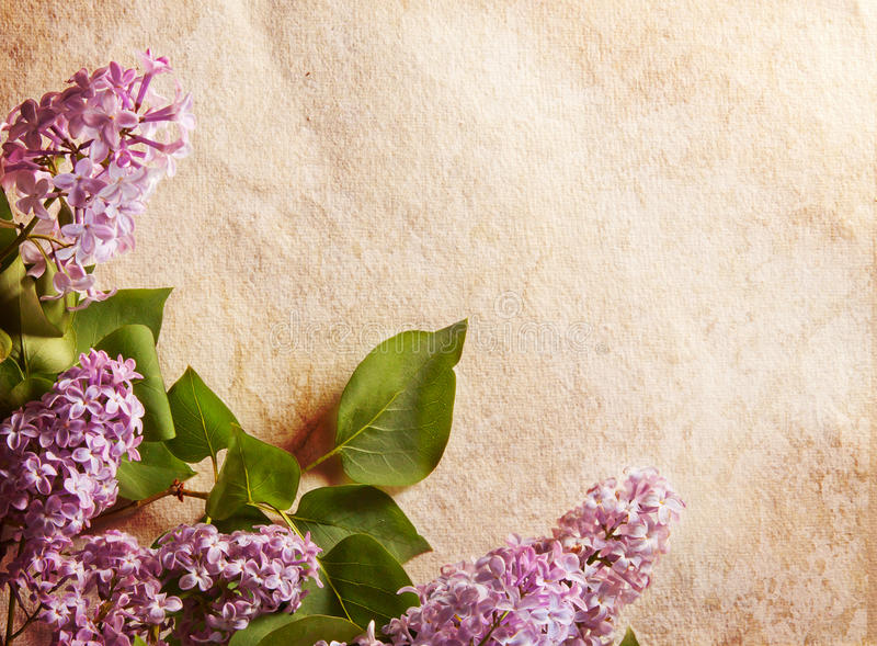 Frame do Lilac fotografia de stock
