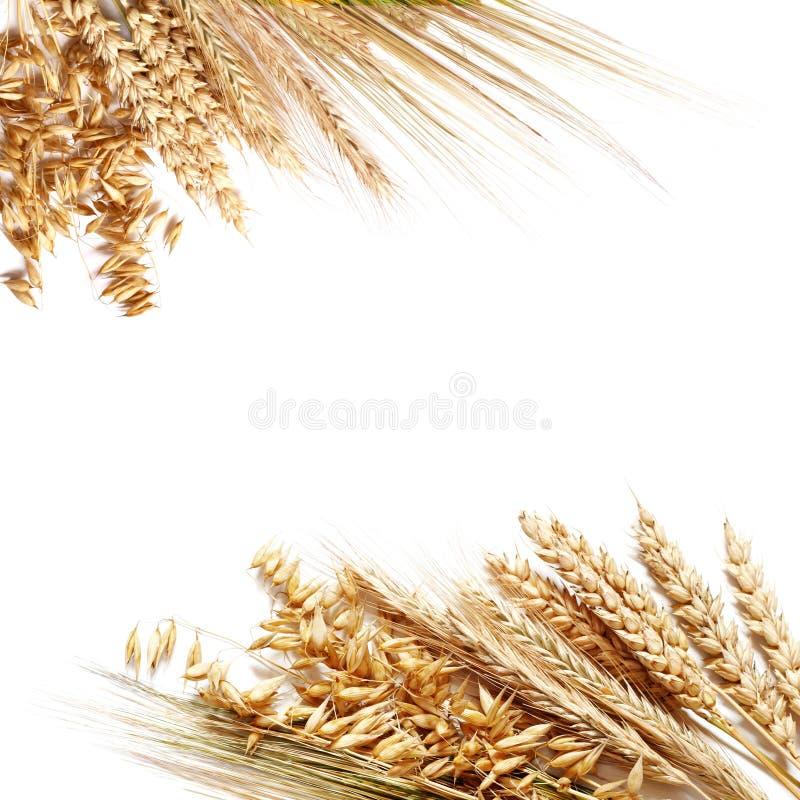 Frame do trigo imagem de stock royalty free