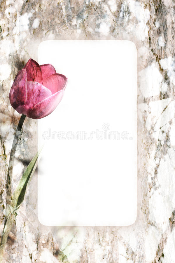 Frame do Tulip foto de stock royalty free