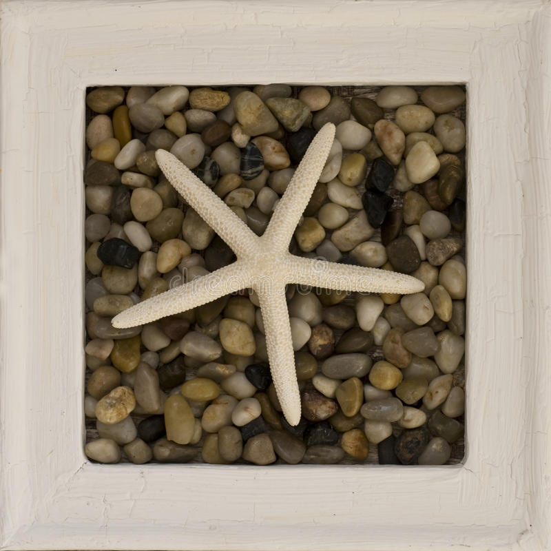 Frame dos Starfish imagens de stock