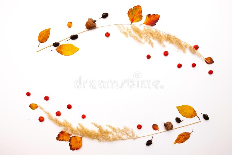 Frame of dried natural autumn grass, yellow leaves and red rowan berries on white background. Copy space. royalty free stock images