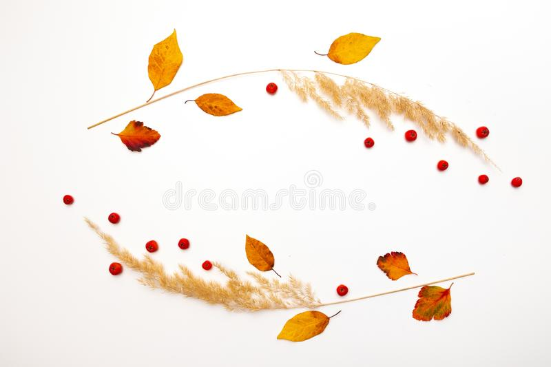 Frame of dried natural autumn grass, yellow leaves and red rowan berries on white background. Copy space. royalty free stock photography