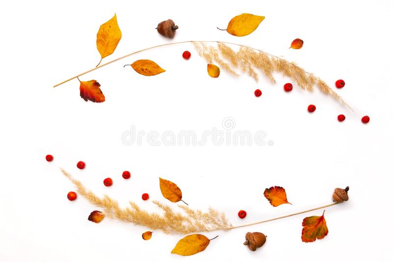 Frame of dried natural autumn grass, yellow leaves and red rowan berries on white background. royalty free stock image