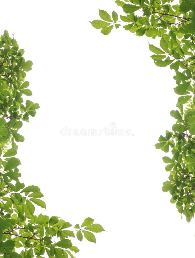 Frame en blad stock afbeeldingen