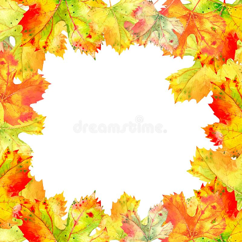Square frame of fall grape vine leaves. Autumn foliage on the white background. Realistic watercolor hand painted. Frame of fall grapevine leaves, orange, red royalty free illustration