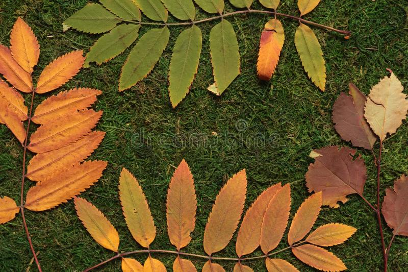 Frame of autumn leaves on green background stock photo
