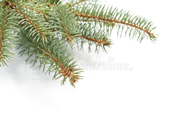 Download Frame of fir branches stock image. Image of christmas - 35811261