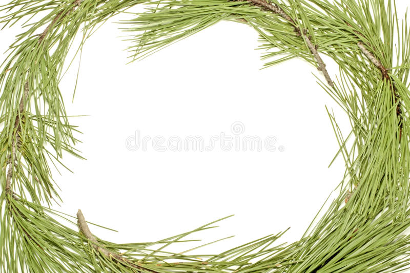 Download Frame From Fir Tree Stock Photo - Image: 17231940