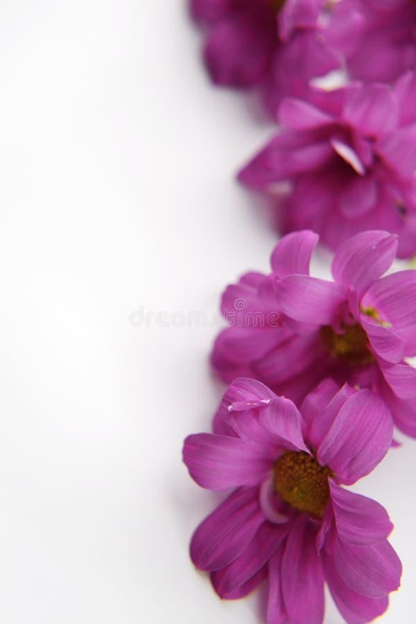 Frame floral foto de stock