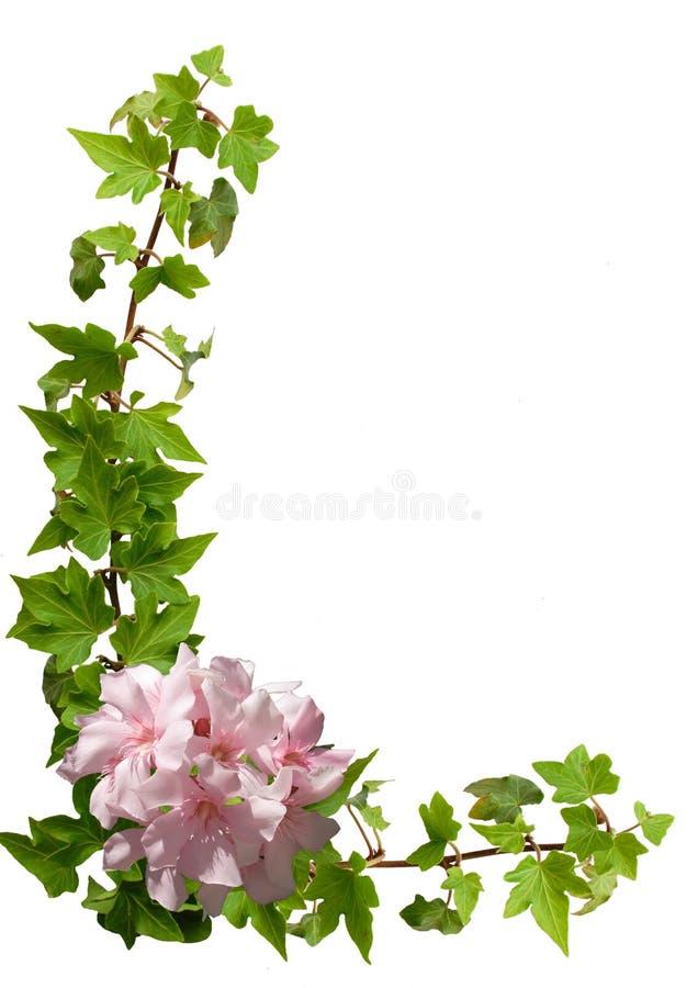 Frame floral - hera, oleander foto de stock royalty free