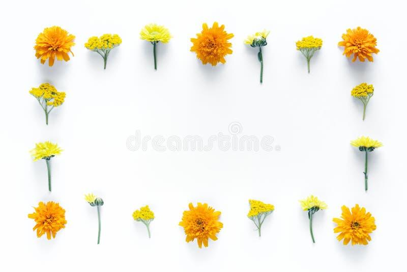 Frame floral no fundo branco fotografia de stock