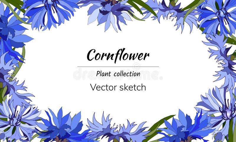 Frame floral para o texto Flores azuis brilhantes em um fundo branco para a decoração, papel, cartões, cumprimentos cornflowers V ilustração stock