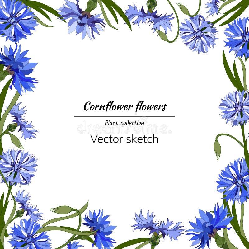 Frame floral para o texto Flores azuis brilhantes em um fundo branco para a decoração, papel, cartões, cumprimentos Ilustra??o do ilustração stock