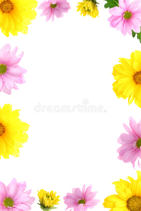 Frame flowers stock photography