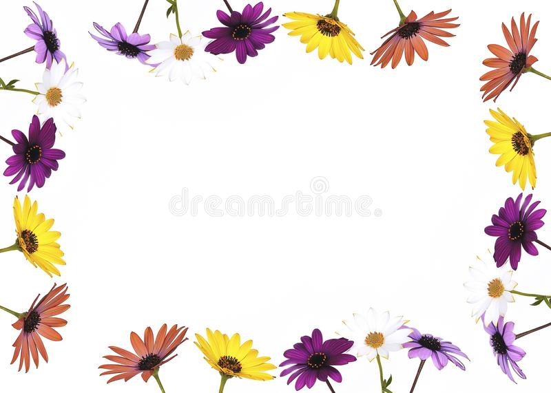 Frame with flowers. Daisies forming a picture with white background vector illustration