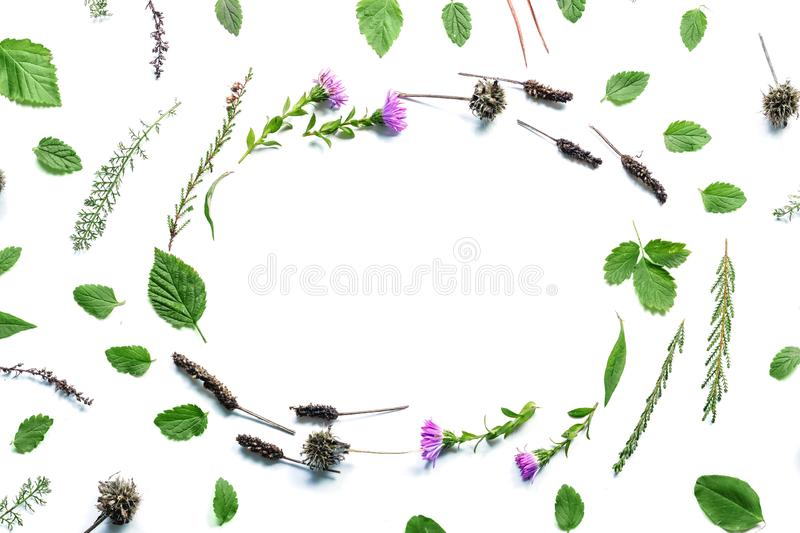 Frame with flowers, branches, leaves and petals isolated on white background. flat lay, overhead view royalty free stock photo