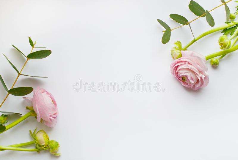 Frame of flowers, pink and orange ranunculus flowers and eucalyptus branches on white background. Flat lay, top view stock photos