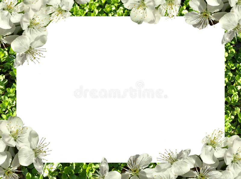 Frame of flowers. png royalty free stock image