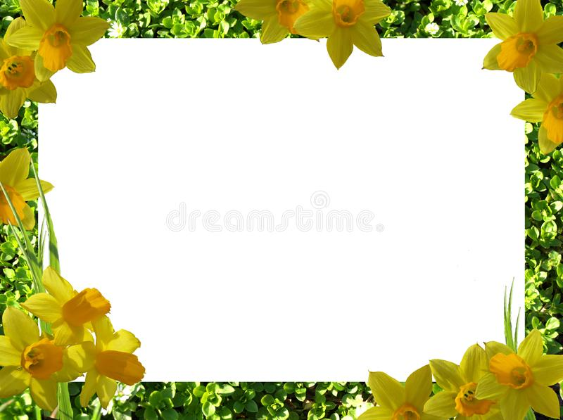 Frame of flowers. png. Green frame with yellow flowers on a transparent background. Additional file png stock photo