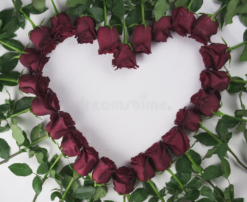 Frame in the form heart of red roses with water droplets on a white background. Frame in the form of a heart of red roses with water droplets on a white stock images