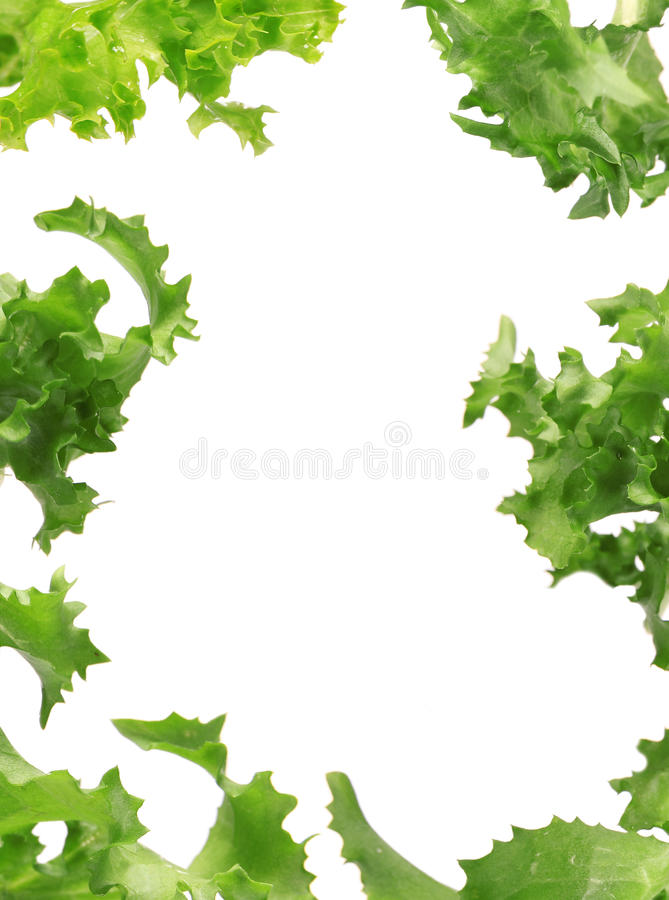 Frame fresco da salada fotografia de stock royalty free
