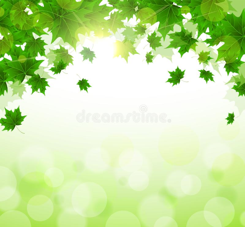 Frame of fresh green leaves of maple. Sunny spring or summer day. Awakening of nature. Cover or background for an article royalty free illustration
