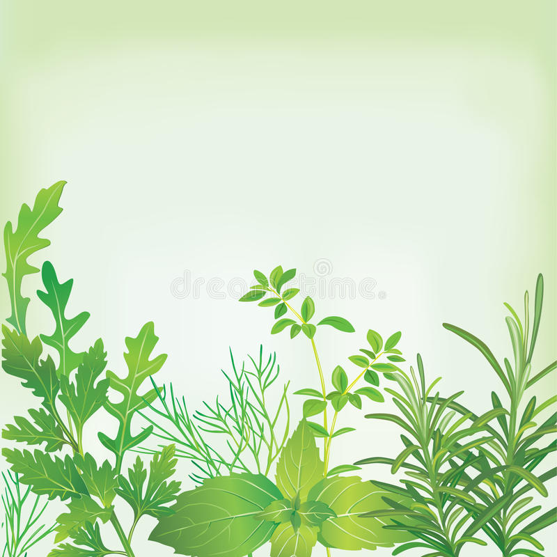 Frame Of Fresh Herbs Royalty Free Stock Photography