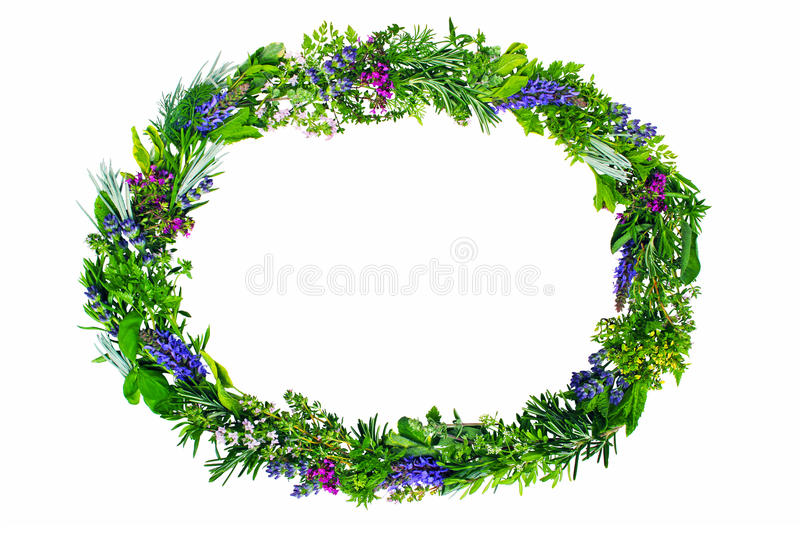 Frame of fresh herbs. Oval frame made of different fresh herbs on white stock photography