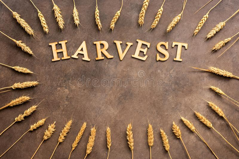 A frame of golden wheat ears and a word from wooden letters- harvest on a dark rustic background. Copy space, top view stock image