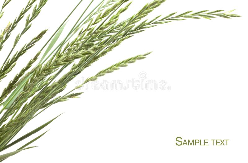 Download Frame of grass stock photo. Image of spring, nature, seeds - 14540382