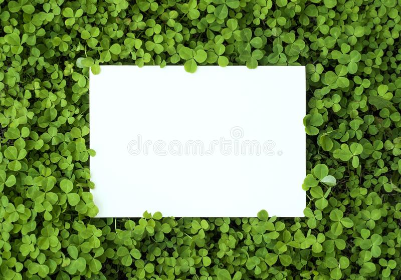 frame of grass stock image