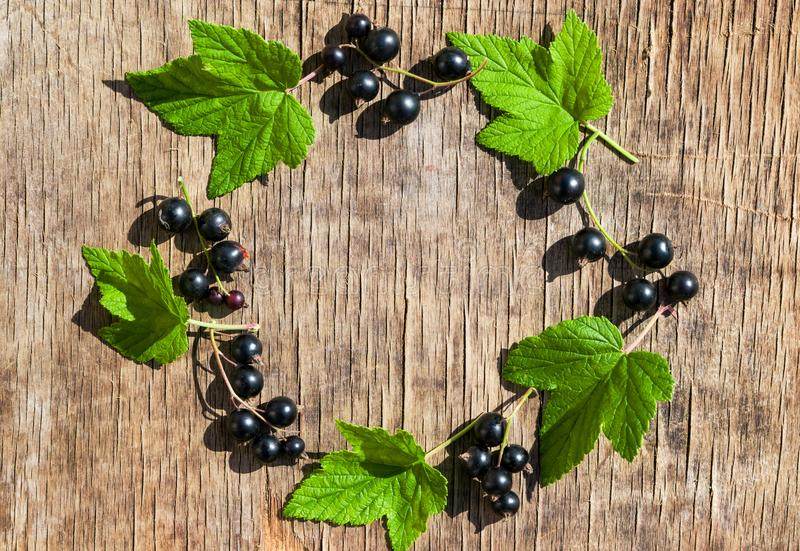 Frame of green leaves and black currant berry on old wooden table, retro vintage background stock photos