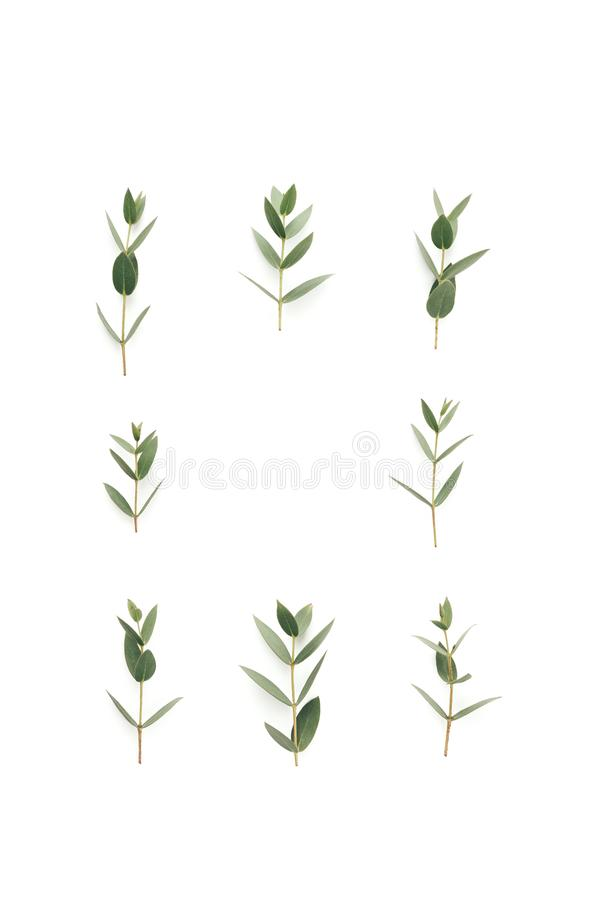 Frame With Green Leaves On White Background. Copy space royalty free stock photos