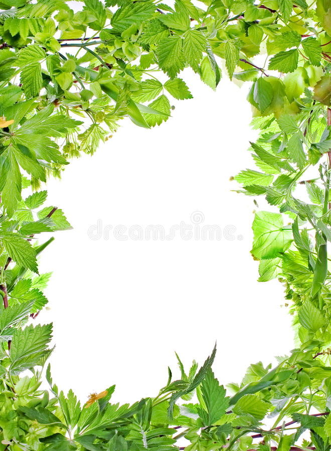 Frame of green plants royalty free stock photography image 19472377 - Marcos para plantas ...