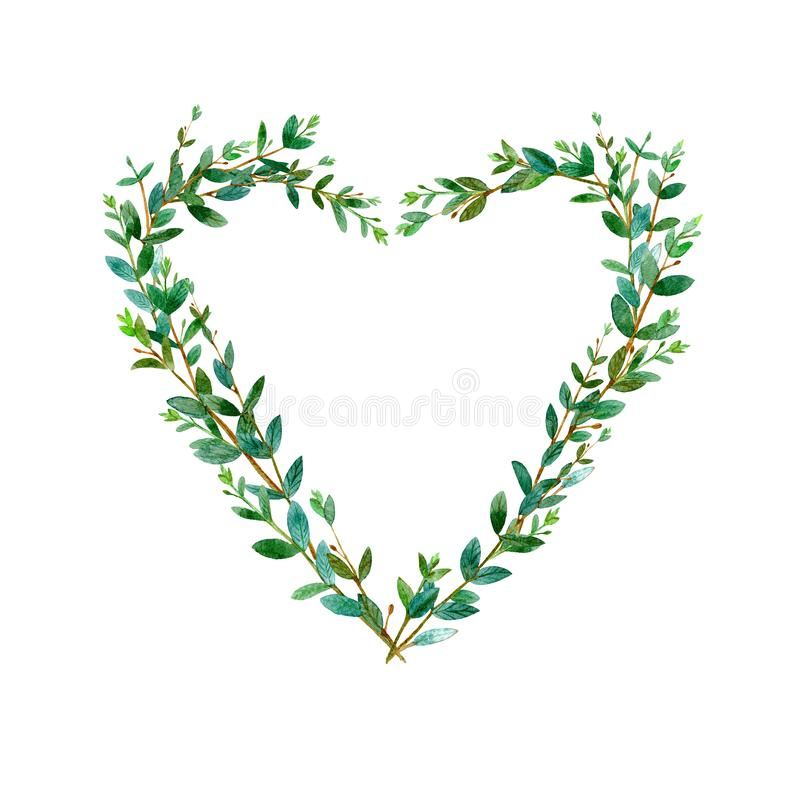 Frame of heart of a eucalyptus branches. Green floral border. vector illustration
