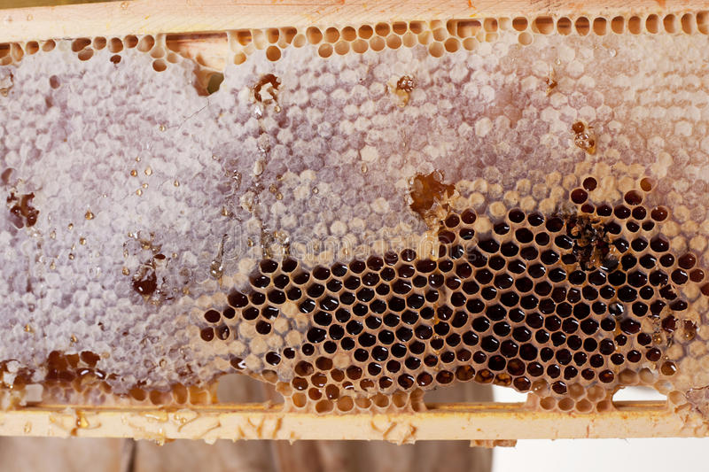 Download A Frame Of Honey stock photo. Image of ingredient, honeycomb - 13003204