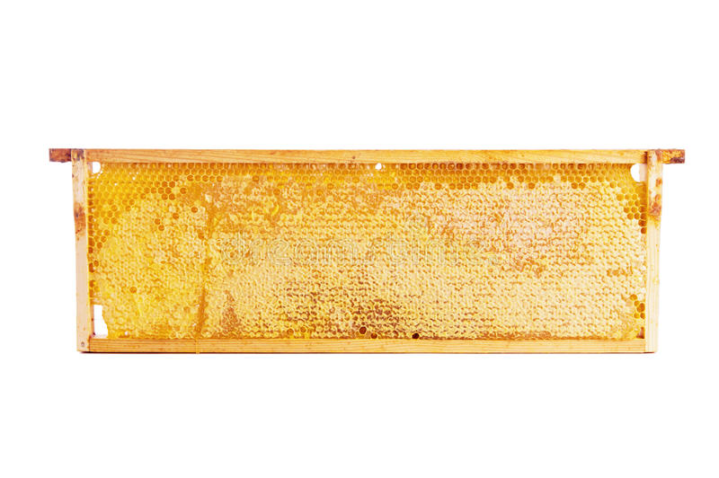 Frame with honeycomb full of honey. Wooden frame with honeycomb full of honey, isolated on white stock images