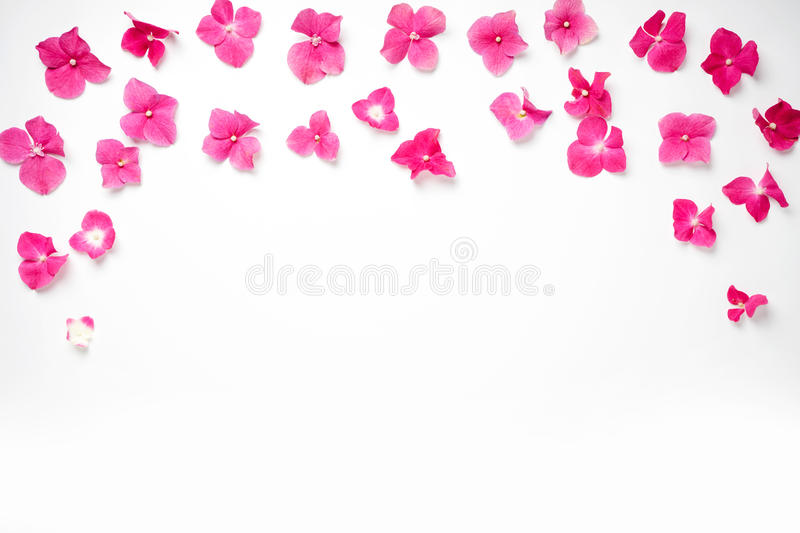 Frame With Hydrangea Flower Isolated On White Stock Photo - Image of ...