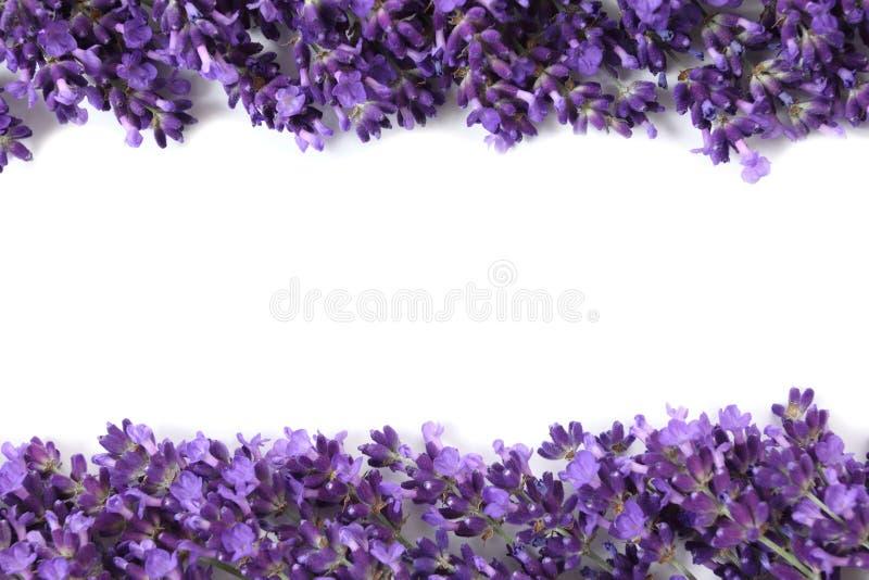Frame with lavender stock photo image of lavender flora 32488362 frame with purple lavender flowers on a white background mightylinksfo Choice Image