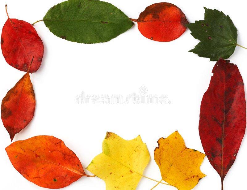 Frame from leaves stock images