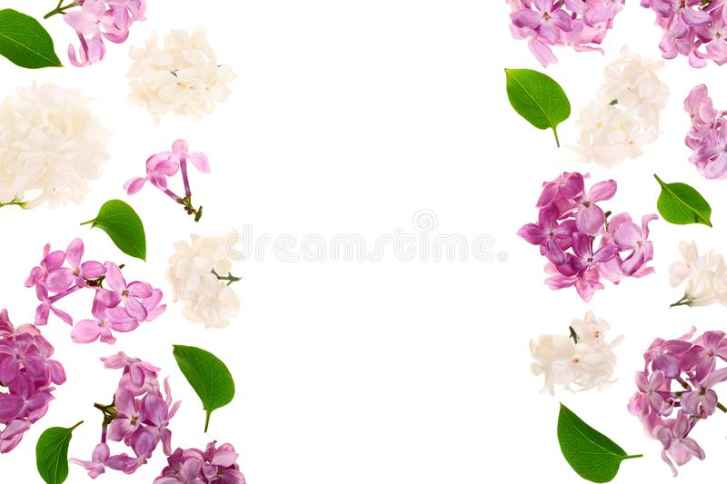 Frame with lilac flowers and leaves isolated on white background with copy space for your text. Flat lay. Top view royalty free illustration