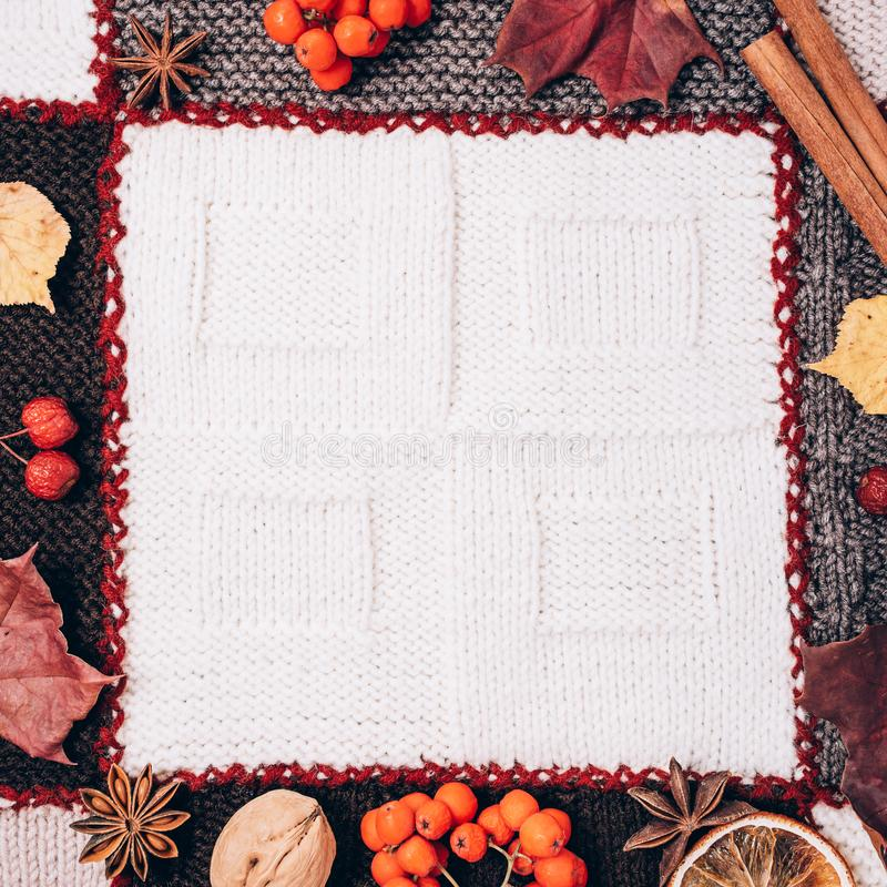 Frame made of autumn leaves, berries and spices royalty free stock photos