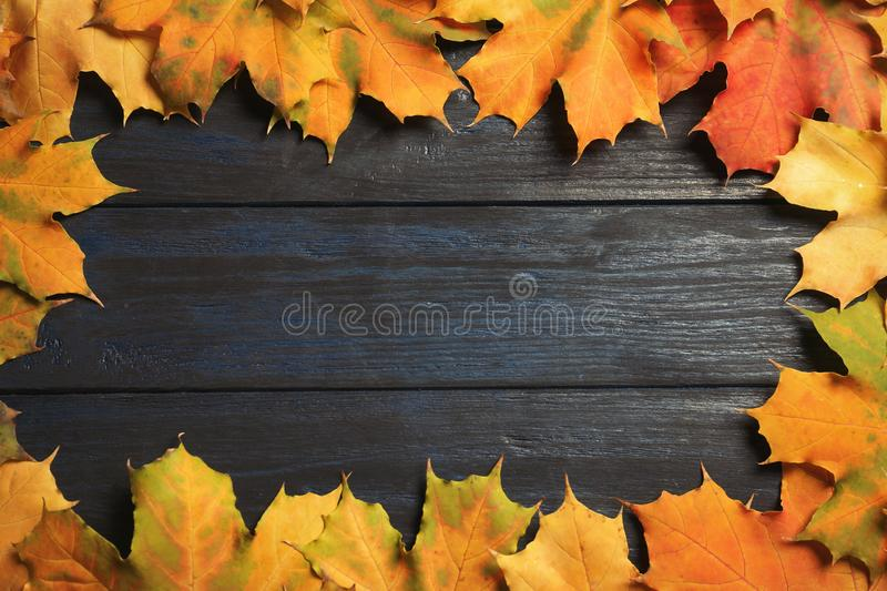 Frame made of autumn leaves royalty free stock image